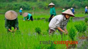 Vietnam see and do