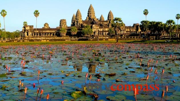 Lotus flowers in the moat that surrounds Angkor Wat
