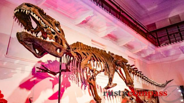 Dinosaurs have always been a hit at the Australian Museum, Sydney