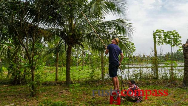Trying my hand at collecting coconuts - Cocohut Ben Tre