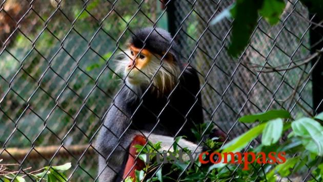 Endangered Primate Centre, Cuc Phuong National Park
