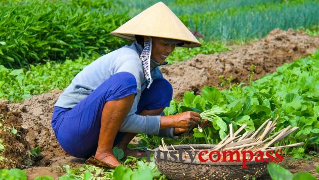 Tra Que vegetable village, Hoi An