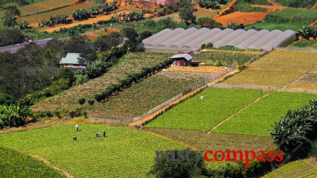 Dalat's cooler weather makes it perfect for fruit and vegetable farming.