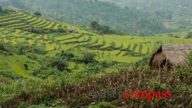 Rice terraces - Dien Bien Phu