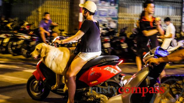 Dog on bike, Hanoi