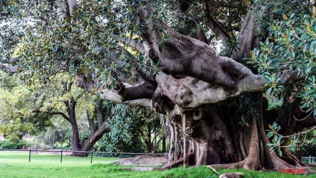 Royal Botanical Gardens, Sydney