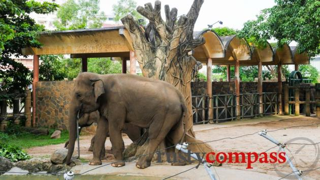 Elephant enclosure, Saigon Zoo and Botanical Gardens