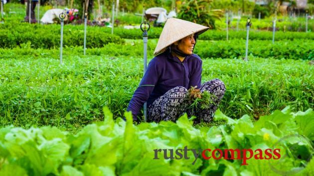 Tra Que Vegetable Garden, Hoi An