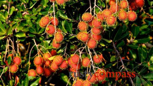 Rambutan orchard