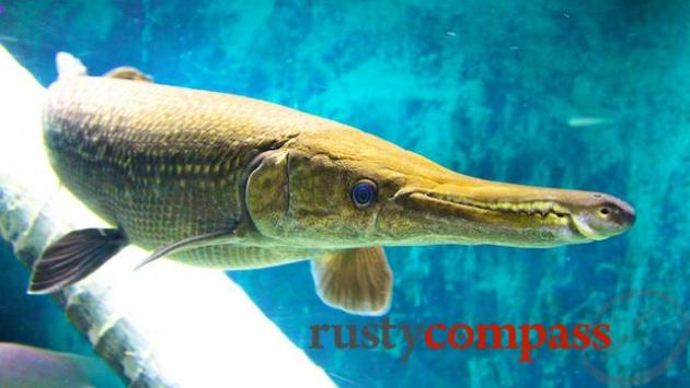 Vinpearl Aquarium