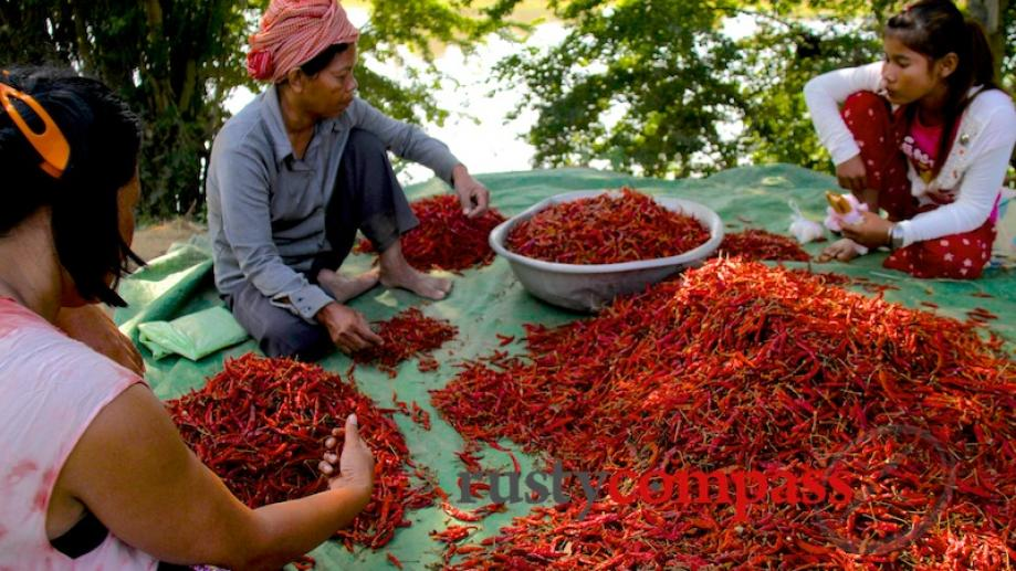 Sorting through the chillies. Battambang.