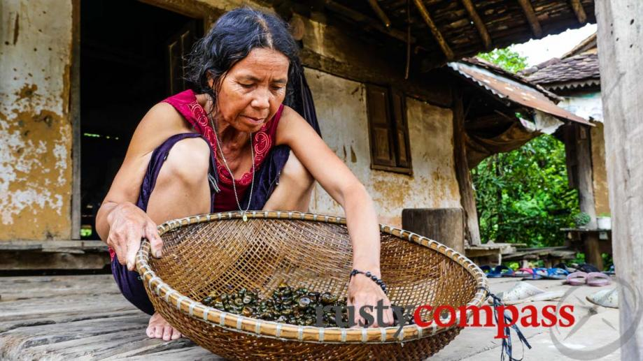 Ba Na woman cleaning snails, Kontum