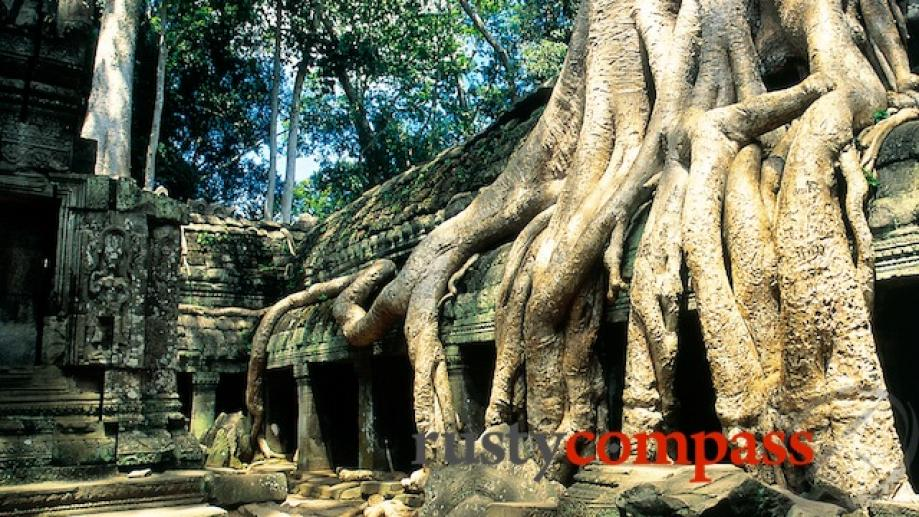 The jungle enmeshed ruins of Ta Prohm are a favourite...