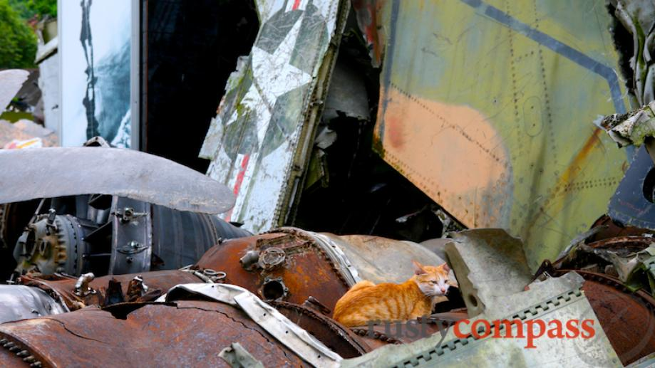 A cat relaxes amidst the B52 wreckage.