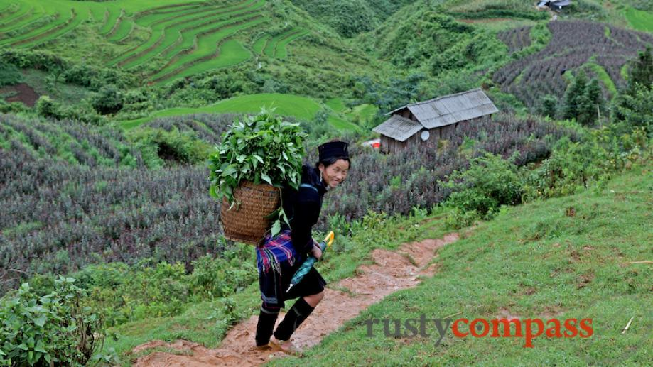 We followed this Black Hmong woman off the road down...