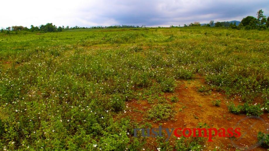 The airstrip at Khe Sanh is finally growing some vegetation....