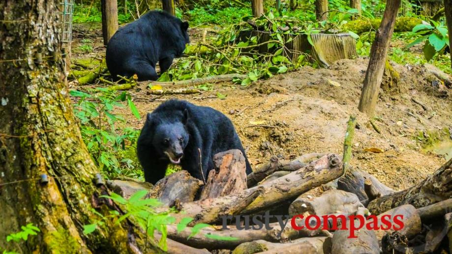 Bear Sanctuary at Luang Prabang, Laos