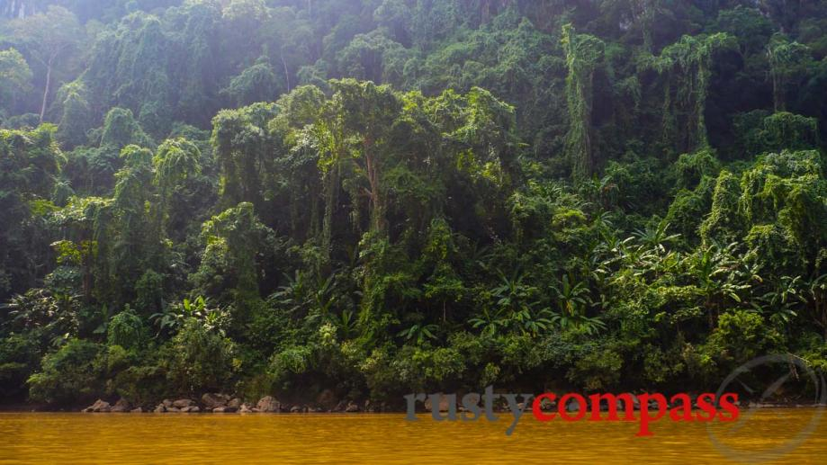 Pristine forest along the Nam Ou River, Laos