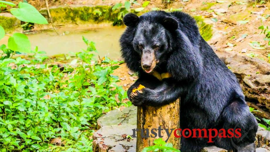 Bear Sanctuary at Kuang Si Falls, Luang Prabang, Laos