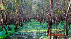 Tra Su Bird Sanctuary, Chau Doc